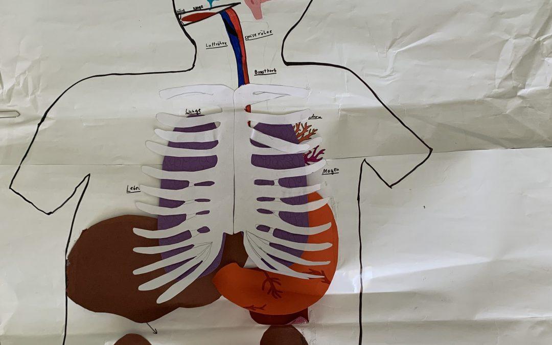 7a: Wir erstellen einen Aufklapptorso für den Biologieunterricht