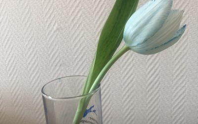 Wassertransport bei Blütenpflanzen